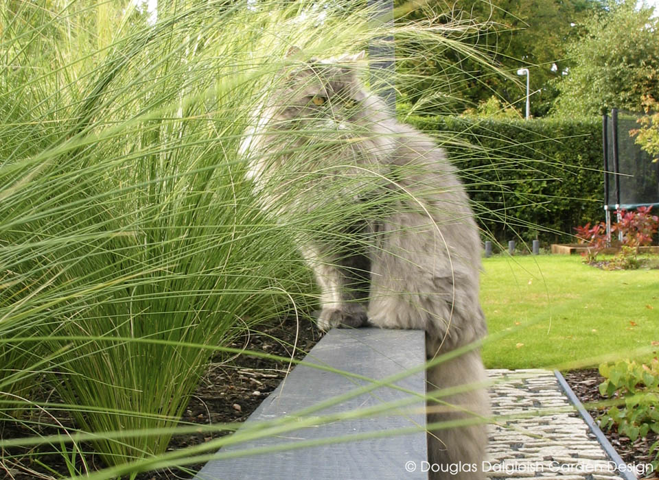 Harry the cat, lurking by the long grass