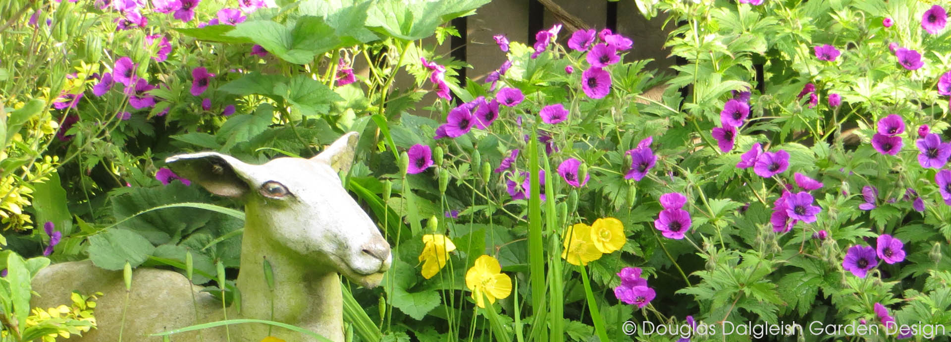 ceramic sheep in geraniums